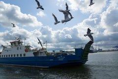 轮渡和海鸥 库存照片