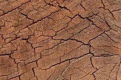 年轮纹理在树的 免版税库存照片