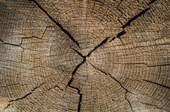 年轮,被切开的树干木纹理  库存图片