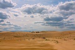 轮藻属沙子 库存照片