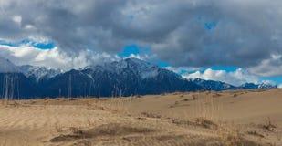 轮藻属沙漠沙子  库存图片