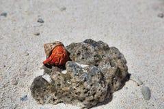 软体动物, Maupiti海岛,塔希提岛,法属波利尼西亚,接近博拉博拉岛 免版税图库摄影
