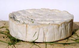 软制乳酪国家(地区) 库存照片