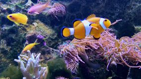 软和坚硬珊瑚,深水下的世界 股票录像