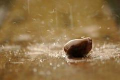 软性在雨中聚焦了禅宗石头,一个岩石 免版税库存图片