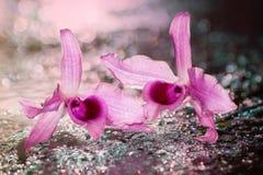 软性弄脏了桃红色兰花花焦点在被弄脏的水滴的 免版税库存图片