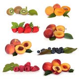 软收集的果子 库存图片