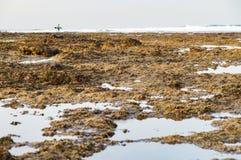 软泥和石海岸,冲浪者在远处现出轮廓 图库摄影