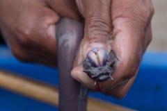 从软泥鳗鱼或八目鳗类鱼的牙 免版税库存照片