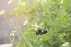 软焦点抽象背景蝴蝶和美好的颜色 免版税图库摄影