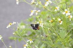 软焦点抽象背景蝴蝶和美好的颜色 免版税库存照片