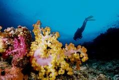 软珊瑚的潜水员 库存照片