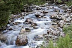软的小河在森林里 免版税图库摄影