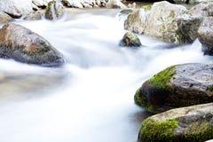 软的小河在森林里 图库摄影