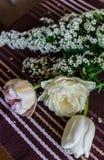 软的桃红色郁金香静物画与spirea枝杈的 库存照片