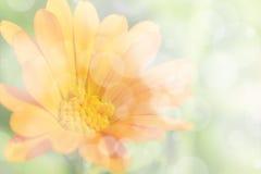软的橙色花卉背景 免版税库存图片