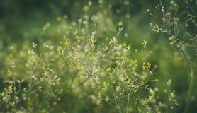 软的淡色绿色用花装饰的bokeh背景 库存照片