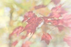 软的焦点秋天叶子 库存图片