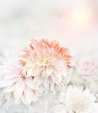 软的焦点花卉背景 库存图片
