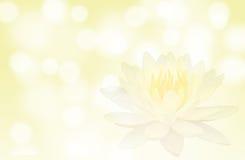 软的焦点莲花或荷花花在黄色颜色摘要背景 免版税库存图片