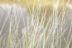 软的焦点,美好的草背景 库存照片