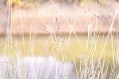 软的焦点,美好的草背景 库存图片