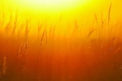 软的照片早晨草甸在温暖的阳光下 库存照片