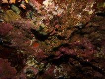 软的珊瑚和岩石纹理 免版税库存照片