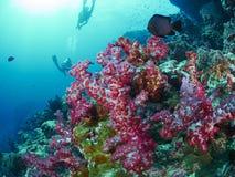 软的珊瑚 库存图片
