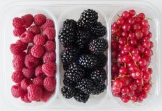 软的莓果 库存图片