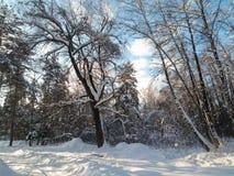 软的蓝天和树在欢乐雪穿戴在早晨阳光下 库存照片