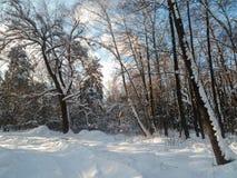 软的蓝天和树在欢乐雪穿戴在早晨阳光下 免版税图库摄影