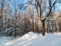 软的蓝天和树在欢乐雪穿戴在早晨阳光下 免版税库存图片