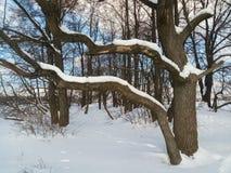 软的蓝天和树在欢乐雪穿戴在早晨阳光下 免版税库存照片