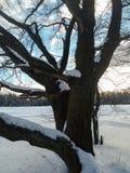 软的蓝天和高多枝树在欢乐雪穿戴  免版税库存图片