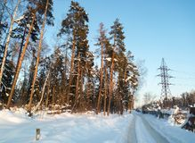 软的蓝天和高杉树在欢乐雪穿戴在早晨阳光下 库存照片