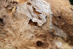 软的死的木头关闭 免版税库存图片