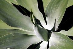 软绵绵地热带叶子的工厂 免版税库存图片