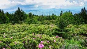 软羊皮的山国家公园北卡罗来纳 免版税库存图片