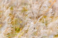 软,梦想的草在秋天 库存图片