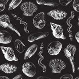 轰击手画无缝的样式 手拉的向量例证 蛤蜊,扇贝,壳 免版税图库摄影