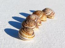 轰击蜗牛 库存图片