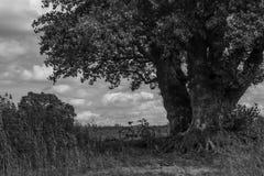 轰烈的树以绿色 免版税库存照片