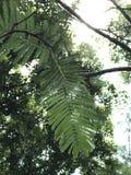 从轰鸣声看见的绿色叶子 库存照片