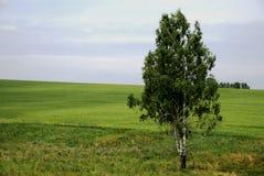 轴承叶子开放俄国西伯利亚空间结构&# 图库摄影