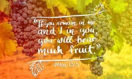 轴承约翰15:5结果实 库存照片