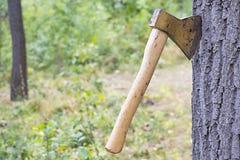 轴推了入树干 库存图片