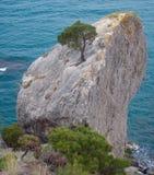轴杉木岩石结构树 库存图片