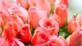 轻拍桃子玫瑰大花束,特写镜头 股票视频