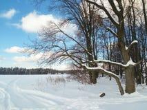 轻拍蓝天和光秃的树在积雪的领域边缘 免版税库存照片